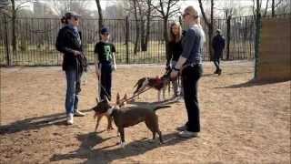 Смотреть онлайн Что делать если собака стала агрессивной к другим собакам
