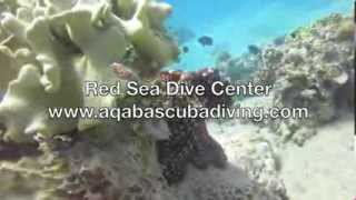 preview picture of video 'Amazing Octopus in Red Sea, Aqaba, Jordan by Red Sea Dive Center (Wonderful Chill Out Ocean Breeze)'