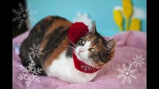 Un grand merci à nos petits pensionnaires qui se sont laissés déguiser pour les photos de Noël et No
