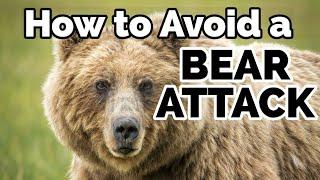 How to Avoid a BEAR ATTACK | My Bear Story