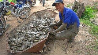 TÉP SỐNG TÁI NƯỚC DỪA - Chuyến bắt cá thú vị ở Tây Ninh - Ân Long An ☆ Tập 479
