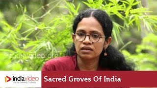 Sacred Groves of India