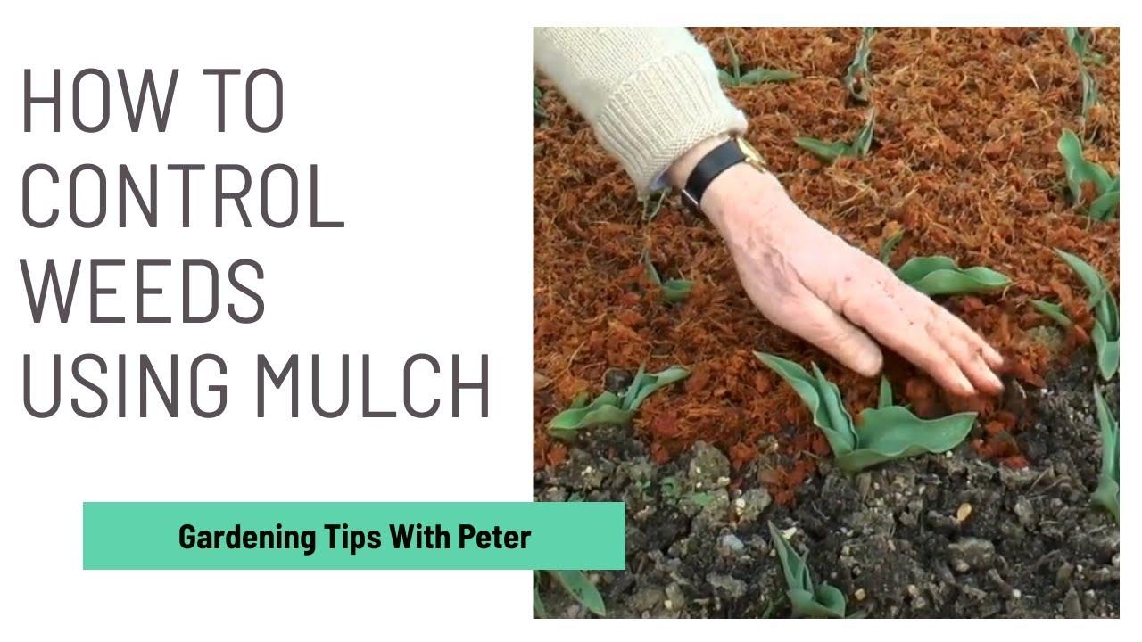 Weed Control Using Mulch