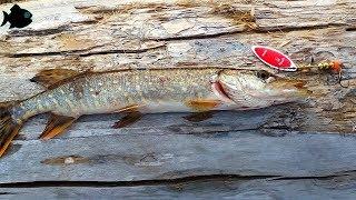 Соревнования по рыбной ловле в архангельске