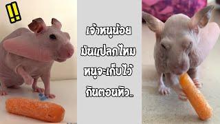 นี่มันอะไรกันเนี่ย ภาพที่คุณเห็นแว๊ปแรกแล้วต้องตกใจ!!... #รวมคลิปฮาพากย์ไทย