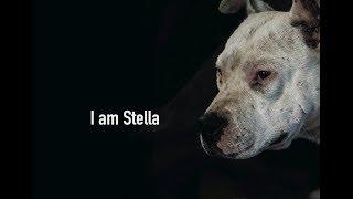 I am Stella