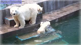 Разыгрались медвежата, распотешились