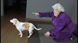 Dogs Make Funny Lady Mad! Funny Dogs Maymo, Penny, & Potpie