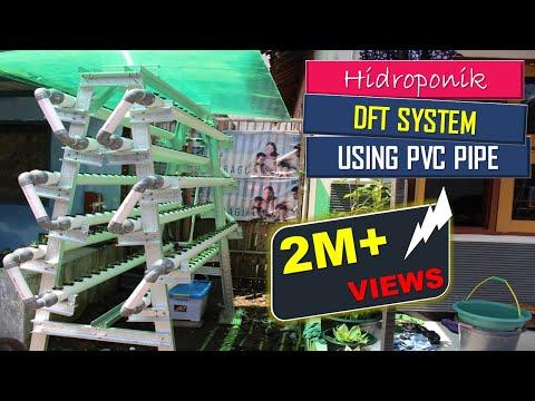 Video cara bertanam hidroponik sederhana di rumah dengan sistem DFT