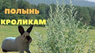 Горькая, полезная полынь в питании кроликов