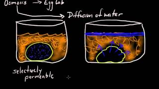 Cell Membrane Osmosis- selectively permeable!!!