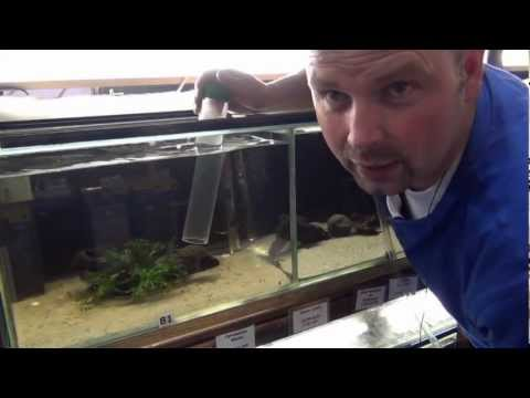 Aquarium Maintenance   How to Clean a Fish Tank