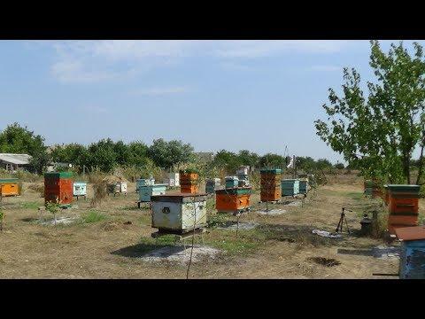 Борьба с осеними вредителями пчелы на пасеке