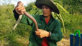 #20 Hoang Dã Bình Thuận | Địa điểm mới bí mật cực nhiều rắn của anh Sang