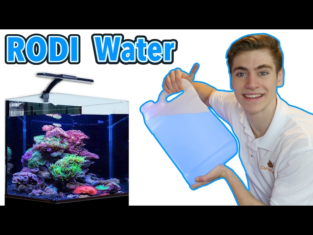 RODI Water For Your College Reef Tank - Best RODI Machine for Beginners!