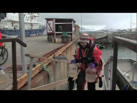 Ozeanversauerung: Eine Lebensgemeinschaft in Auflösung