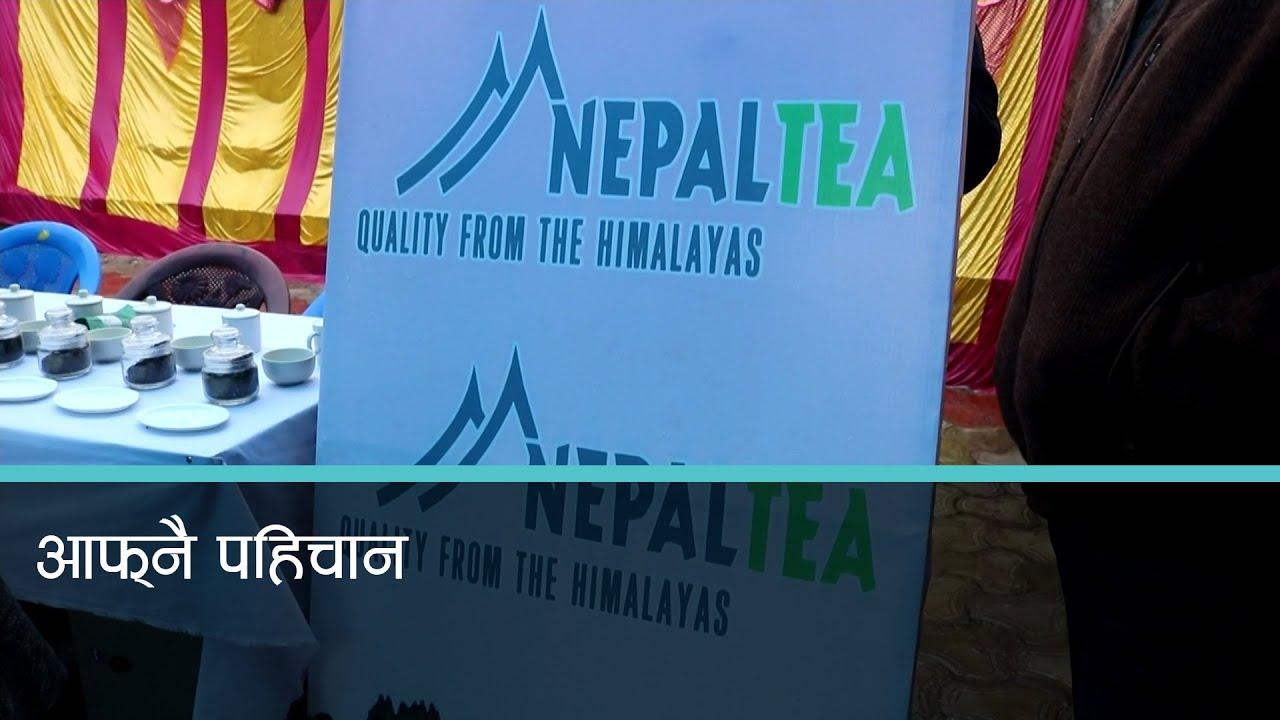नेपाली चियाको आफ्नै ब्रान्ड, हिमाल अंकित ट्रेडमार्क अन्तर्राष्ट्रिय बजारमा