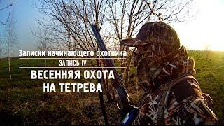 Смотреть онлайн Охота на тетерева весной на току