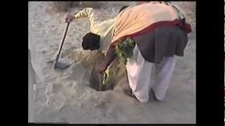 preview picture of video 'Jatropah Plantation on Sand in Muzaferghar .flv'