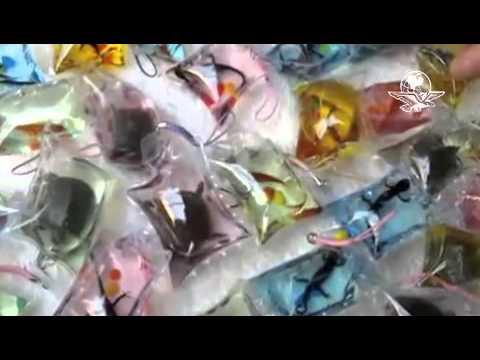 Venden LLaveros Con Animales Vivos   Marzo  /  2013