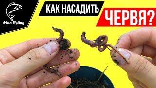 Насадка червя на крючок для рыбалки