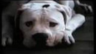 Trailer of Homeward Bound: The Incredible Journey (1993)