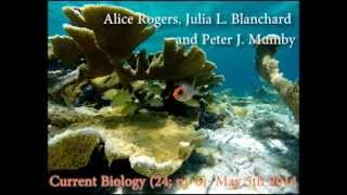 Coral Reef Fisheries and Habitat Degradation