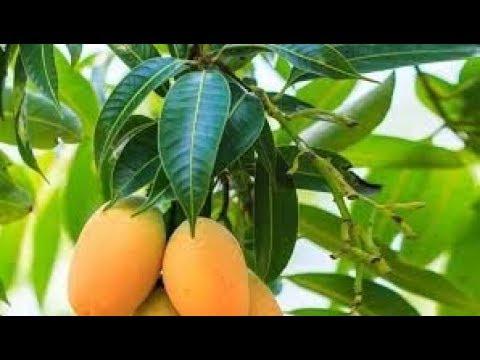 Lo que la fruta se puede comer con una pizca de azúcar en la sangre