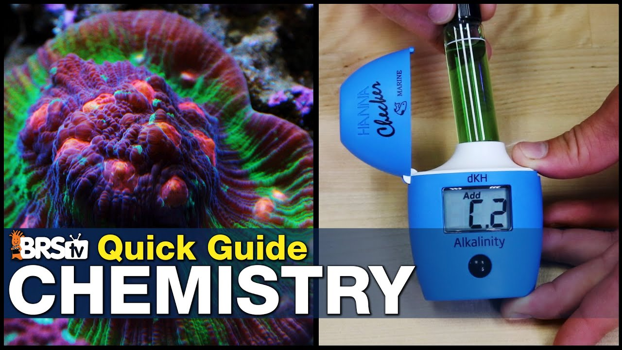 Quick Guide to Mastering Reef Tank Chemistry - Become an expert reef tank chemist without a degree!