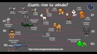 ¿Cuántos años viven los animales?
