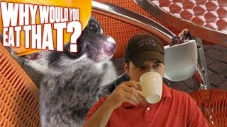 Kopi Luwak aka Cat Poop Coffee - Why Would You Eat That?