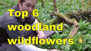 WOODLAND WILDFLOWERS British Wildflower & Plant Identification For Uk Foragers And Naturalists.