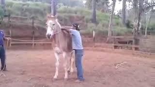 O O Que Da Muntar Em Cavalo Que Não é Domado Kkk