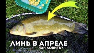 Рыба линь как когда и где ловить линя