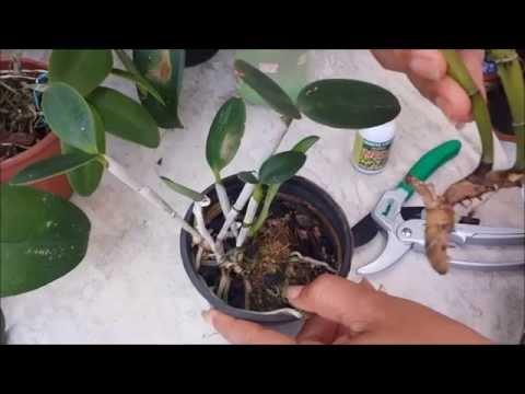 Tesoura de pregos com um fungo