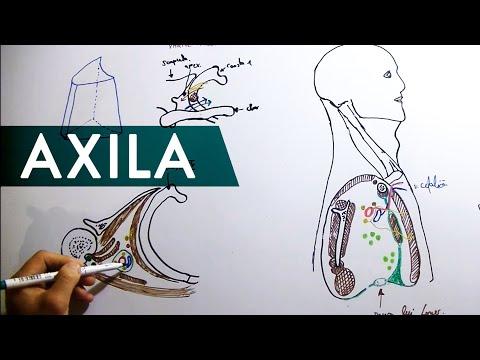 Exerciții pentru tratamentul artrozei pentru articulația umărului