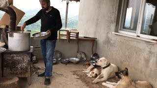 PARS REİS KEMİK PARTİSİNDE PABLONUN YÜZÜNE BAKMADI :)) #jackrussell #canecorso #dogoargentino #dog