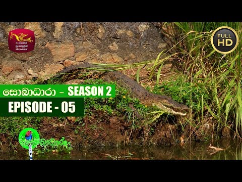 Sobadhara - සොබාධාරා | Season- 02 | Episode 05 | 2018-02-02 | Rupavahini Documentary