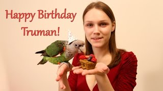 Truman Cape Parrot - Happy 7th Birthday!
