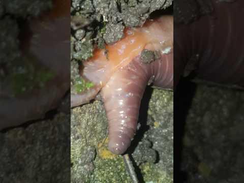 Labanan laban uniselular parasito