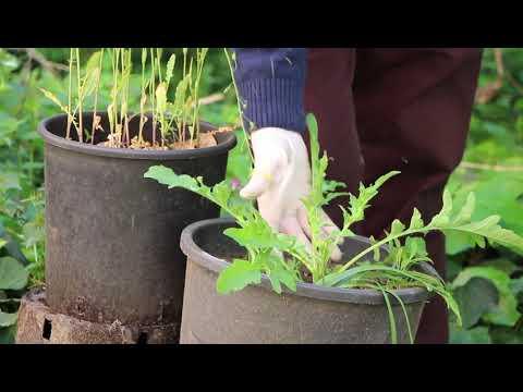 La sostenibilità che include Landar e papavero