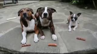 Смешные собаки, Смешное видео о собаках 2018#11