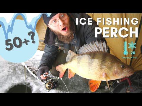 Isfiskeri efter store aborrer med jig