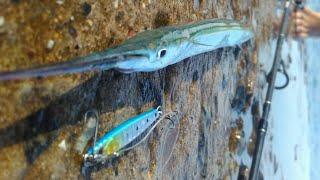 Железный порт рыбалка на саргана