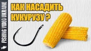 Как правильно насадить кукурузу на крючок при ловле карася