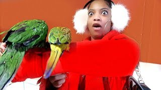 Download Youtube: SHE'S DEFINITELY NOT FEELING THE NEW PET BIRDS!!! | VLOGMAS DAY 7