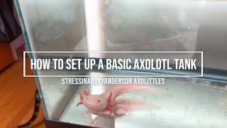 Axolotl: Basic Tank Set Up