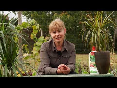 Băutură de detoxifiere a colonului