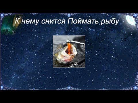 К чему снится Поймать рыбу (Сонник)