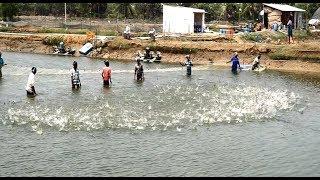 Viral Fishing Videos Of the Year - Prawns Crowd
